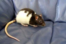 Bergamo Scienza 2014: Filippi e Remuzzi sulla sperimentazione animale