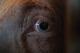 Earthlings, Il biglietto di ingresso, Facing animals: tre documentari
