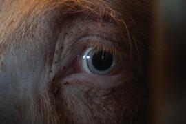 Earthlings, Il biglietto di ingresso, Facing animals: tre documentari